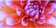 ご用途に合わせた豊富な品揃え【angelique-アンジェリーク 広島市中区の花屋】