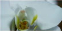 とてもお買い得な鉢物市【angelique-アンジェリーク 広島市中区の花屋】