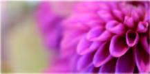 毎日新鮮なお花をご提供【angelique-アンジェリーク 広島市中区の花屋】