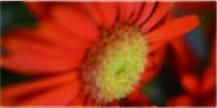 旧市内配達無料(広島市)【angelique-アンジェリーク 広島市中区の花屋】